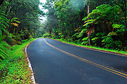 Park road through the fern forest, Hawaii Volcanoes National Park, Hawaii USA