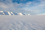 Moskusryggen from Rabotbreen, Svalbard.