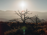 http://Duncan.co/dead-tree-at-lone-pine