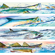 The Pursuit Series™ by Mick Coulas captures several species of game fish pursuing bait, available for license to be reproduced on clothing, prints and gifts that every fisherman will enjoy. This design features (Top) Snook pursuing Pinfish, Tarpon pursuing Mullet, Mackerel pursuing Threadfin, (Bottom) Sea Trout pursuing Shrimp. Copyright Watermark does not show up on Print. Variety of sizes on paper, canvas, and metal. © Registered Call for Information.