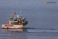 Lobster boat checking traps in Winter Harbor, Maine, USA