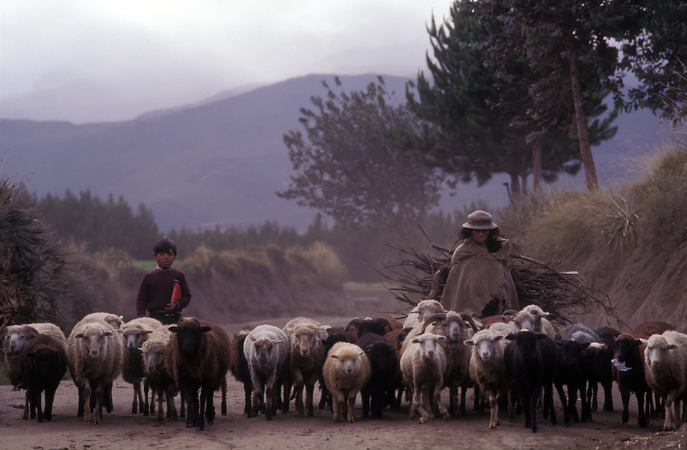 Shepherdess and helper return from grazing her sheep in the Andean foothills of Cotopaxi Province, Ecuador