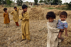 Traditional behavior starts early, as relatives of Mukhtar Mai harvest wheat in her village, Meerwala, Pakistan, April 28, 2005. Mai, 33, went against the Pakistani tradition of committing suicide when she brought charges against the men who gang raped her nearly three years ago. Most of her family opposes her fight for justice against her attackers.