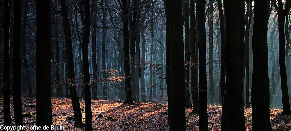 Sunlight filters through the treetops to illuminate parts of the dark forest beneath.