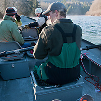 Wayne Ackerlund, owner and operator of Skagit River Eagle Tours, guides his heated row boat down the Skagit River, looking for the birds of prey.  Just around Christmas is the peak time for viewing eagles in the area, although finding a clear day is not always possible.  Skagit River Eagle Tours is a great way to see the birds, floating slowly down river in a big, stable boat.  Photo by William Byrne Drumm.