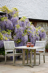 Table and chairs on the paving by the barn at Manor Farm House. Astelia chathamica AGM in a large terracotta pot, sedums on the table. Wisteria.