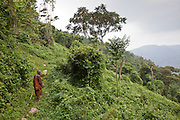 James, one of the elders of the traditional Batwa pygmies from the Bwindi Impenetrable Forest in Uganda walks one of the well-trodden forest paths. They were indigenous forest nomads before they were evicted from the Bwindi Impenetrable Forest when it was made a World Heritage site to protect the mountain gorillas.  The Batwa Development Program now supports them.