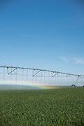 Wheat field at Madison Farms in Echo, Oregon
