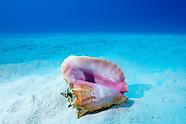 Seahorses Starfish Shells