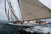 Columbia sailing in the Opera House Cup regatta.
