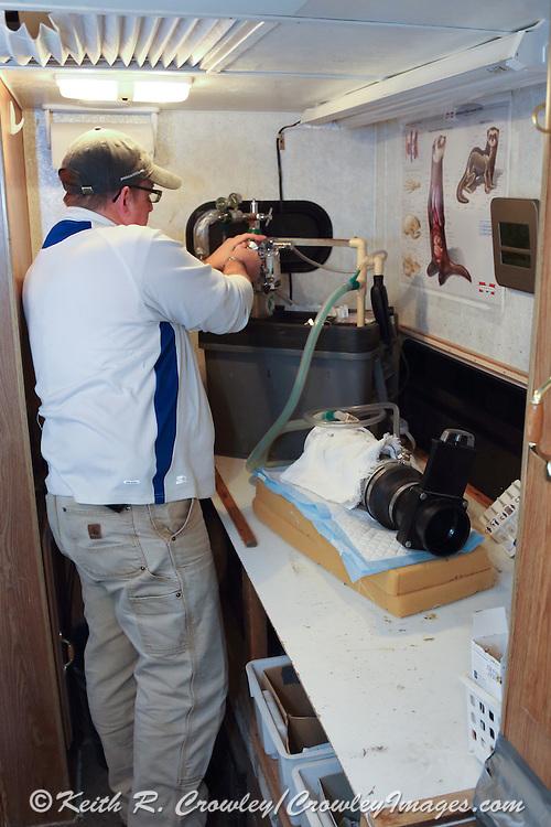 Wildlife biologist, Travis Livieri, sedates a Black-footed ferret, near Wall, South Dakota