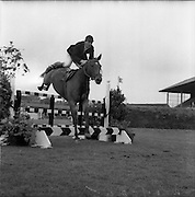 """06/08/1960<br /> 08/06/1960<br /> 06 August 1960<br /> R.D.S Horse Show Dublin (Saturday). """"Dundrum"""", owned by Mr James Wade, Camas, Cashel, Co. Tipperary and ridden by Mr. Thomas Wade (brother of James) won the Wylie Perpetual Challenge Trophy, the 'Civillian' Championship of the Show, at the Dublin Horse Show. Picture shows""""Dundrum"""" ridden by Thomas Wade, clearing one of the jumps in the second round. He was the only competitor to complete the course without fault."""