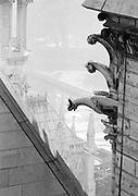 Gargoyles on corner of roof at Notre-Dame Cathedral, Paris, France