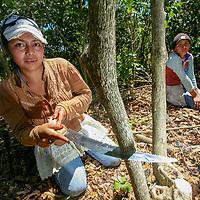 Jessica Corado, 22, with Sonia Ramírez, 20, pruning coffee bushes in the El Venado coffee farm, part of the Las Lajas coop that is a member of UCRAPROBEX. UCRAPROBEX a certified Fairtrade producer based in El Salvador.