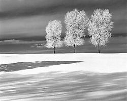 Three Olives in Winter,Crestone Colorado