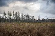 Cloudy late autumn day on sedge marsh with small pines, near Limbaži, Latvia Ⓒ Davis Ulands | davisulands.com