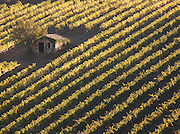 A small outhouse amongst the straight lines of grapevines growing in a vineyard at Montalcino, Tuscany, Italy