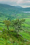 Welsh landscape in Snowdonia National Park at Lake Llyn Gwynant, Gwynedd, Wales