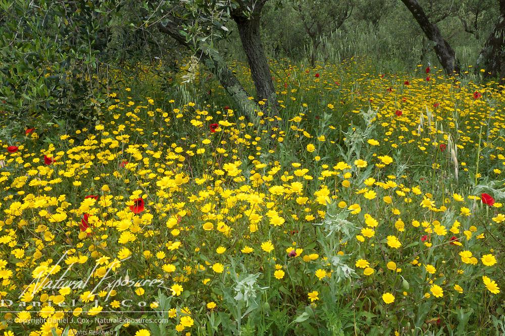Flowers on the hillside above Manarola, Italy