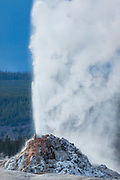 White Dome Geyser erupting in Yellowstone National Park