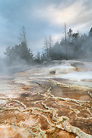 Grassy Spring. Desposits of travertine colored by thermophilic bacteria, Upper Terraces Mammoth Hot Springs, Yellowstone National Park