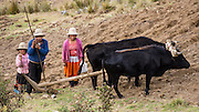 Campesino farm family poses with oxen plow at Pishgopampa village in Jancapampa Valley. Day 4 of 10 days trekking around Alpamayo, in Huascaran National Park, Cordillera Blanca, Andes Mountains, Peru, South America.