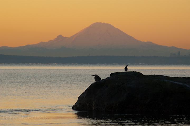 Birds on Puget Sound with Mount Rainier