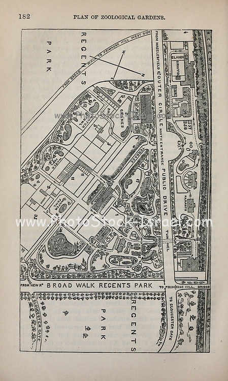 Plan of the Zoological Gardens From the book ' London and its environs : a practical guide to the metropolis and its vicinity, illustrated by maps, plans and views ' by Adam and Charles Black Published in Edinburgh by A. & C. Black 1862
