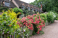 Rosa 'Ferdy' growing on a fence in front of cottages at Cothay Manor, Greenham, Wellington, Somerset, UK