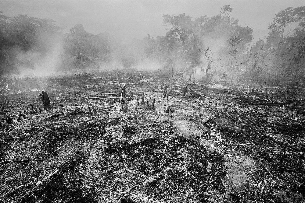Brazil, Taparabu, frontiere franco-bresilienne, Amapa.<br /> <br /> Taparabu, communaute de pecheurs dependant d'Oiapoque.  Abattis appartenant a des indiens palikurs.