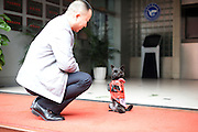CHONGQING, CHINA - DECEMBER 08: China Out - Finland Out<br /> <br /> Dog Walks With Two Legs<br /> <br /> A pet dog walks with two legs following its owner on December 8, 2013 in Chongqing, China. The 2-year-old dog and its owner take about one and a half hours to walk every day, and the dog walks with two legs in most of the time, except going up and down stairs.<br /> ©Exclusivepix