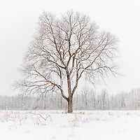 https://Duncan.co/lone-tree-in-the-snow