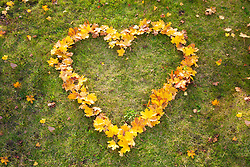 Yellow autumn leaves heart shape grass from above