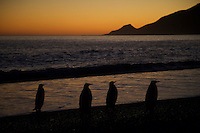 St. Andrews Bay<br />South Georgia<br />United Kingdom Overseas Territory<br />A Subantarctic Island in the Southern Ocean