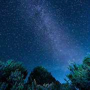 The milky way over trees.
