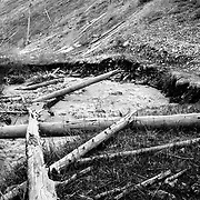 Heather Goodrich rides single track littered with trees from a massive avalanche.