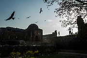 """5th February 2015, New Delhi, India. Black kites soar overhead as believers move through the ruins  to pray, make offerings and ask for wishes to be granted by Djinns in the ruins of Feroz Shah Kotla in New Delhi, India on the 5th February 2015<br /> <br /> PHOTOGRAPH BY AND COPYRIGHT OF SIMON DE TREY-WHITE a photographer in delhi. + 91 98103 99809. Email:simon@simondetreywhite.com<br /> <br /> People have been coming to Firoz Shah Kotla to leave written notes and offerings for Djinns in the hopes of getting wishes granted since the late 1970's. Jinn, jann or djinn are supernatural creatures in Islamic mythology as well as pre-Islamic Arabian mythology. They are mentioned frequently in the Quran  and other Islamic texts and inhabit an unseen world called Djinnestan. In Islamic theology jinn are said to be creatures with free will, made from smokeless fire by Allah as humans were made of clay, among other things. According to the Quran, jinn have free will, and Iblīs abused this freedom in front of Allah by refusing to bow to Adam when Allah ordered angels and jinn to do so. For disobeying Allah, Iblīs was expelled from Paradise and called """"Shayṭān"""" (Satan).They are usually invisible to humans, but humans do appear clearly to jinn, as they can possess them. Like humans, jinn will also be judged on the Day of Judgment and will be sent to Paradise or Hell according to their deeds. Feroz Shah Tughlaq (r. 1351–88), the Sultan of Delhi, established the fortified city of Ferozabad in 1354, as the new capital of the Delhi Sultanate, and included in it the site of the present Feroz Shah Kotla. Kotla literally means fortress or citadel."""