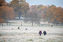 © Licensed to London News Pictures. 20/11/2020. London, UK. Walkers enjoy a frosty morning in Richmond Park, South West London as temperatures dropped bellow -1c last night for the South East of England. However, the weekend will become milder with some rain and light winds. Photo credit: Alex Lentati/LNP