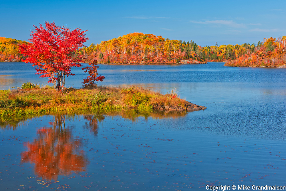Red maple in autumn at St.Poithier Lake<br />Worthington<br />Ontario<br />Canada