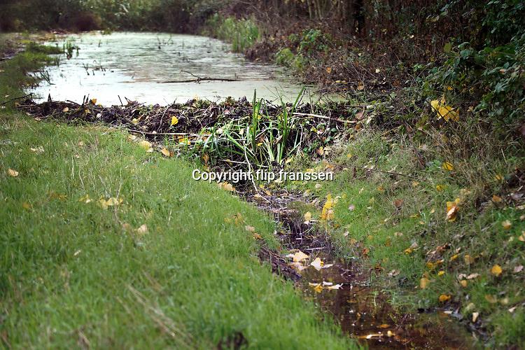Nederland, Ubbergen, 29-7-2020 In een bosje onderaan de stuwwal op de grens met de ooijpolder heeft zich een bever, gevestigd . Omgeknaagde bomen en het veranderen van de waterhuishouding via dammen van takken, klei en modder vormen hiervoor het bewijs. De bever heeft de waterloop van de afwatering van water, wat uit de stuwwal bij Nijmegen loopt, aangepast zodat het waterniveau gestegen is en bomen met de voeten onder water komen . Bevers eten de bast van bomen .Foto: ANP/ Hollandse Hoogte/ Flip Franssen