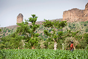"""Man works on a millet field in the Bandiagara Escarpment with the so-called """"God's Finger"""" in the background. Millet is also used to make beer in the Dogon Country. The Dogon Country is the most visited part of Mali with tourists visiting its tipical  villages that can be located on the cliff, on the sandy plain or in the rocky plateau"""