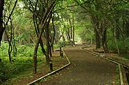 A trailin Aowanda NAtional Forest Park.