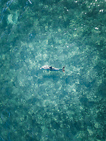Aerial view of a dolphin swimming in the clear blue sea in Monkey Mia, Australia.