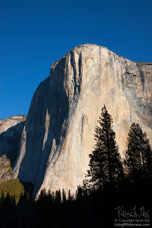 El Capitan, a prominent granite monolith in Yosemite National Park, California, is turned golden by the rising sun. The summit of El Capitan is at an elevation of 7,573 feet (2,308 meters); it extends about 3,000 feet from the Yosemite Valley floor.
