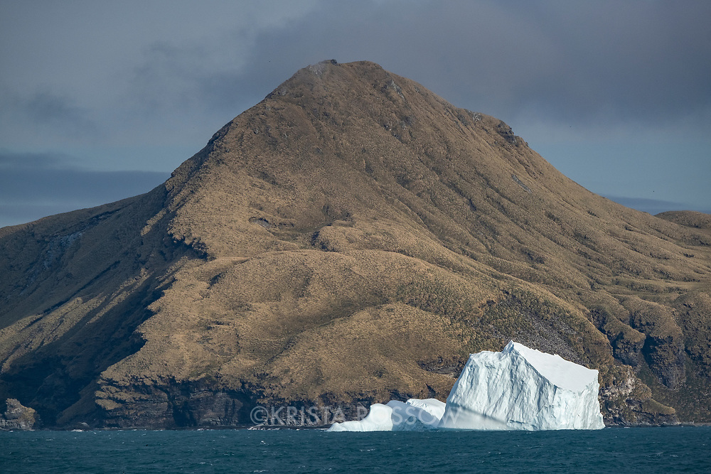 An iceberg rests in front of a mountain covered in tussock grass and a penguin colony in Royal Bay on the north coast of South Georgia Island.