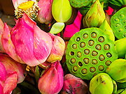 05 JUNE 2015 - KUALA LUMPUR, MALAYSIA:  Lotus used in Hindu prayers for sale in the Little India section of Kuala Lumpur.    PHOTO BY JACK KURTZ