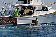 """Pacific Sail Fish jumping behind the 37' Merritt boat """"Release""""."""