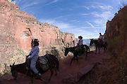 The Grand Canyon, Arizona.Angel Bright Trail, The Grand Canyon, Arizona.Angel Bright Trail, The Grand Canyon, Arizona.