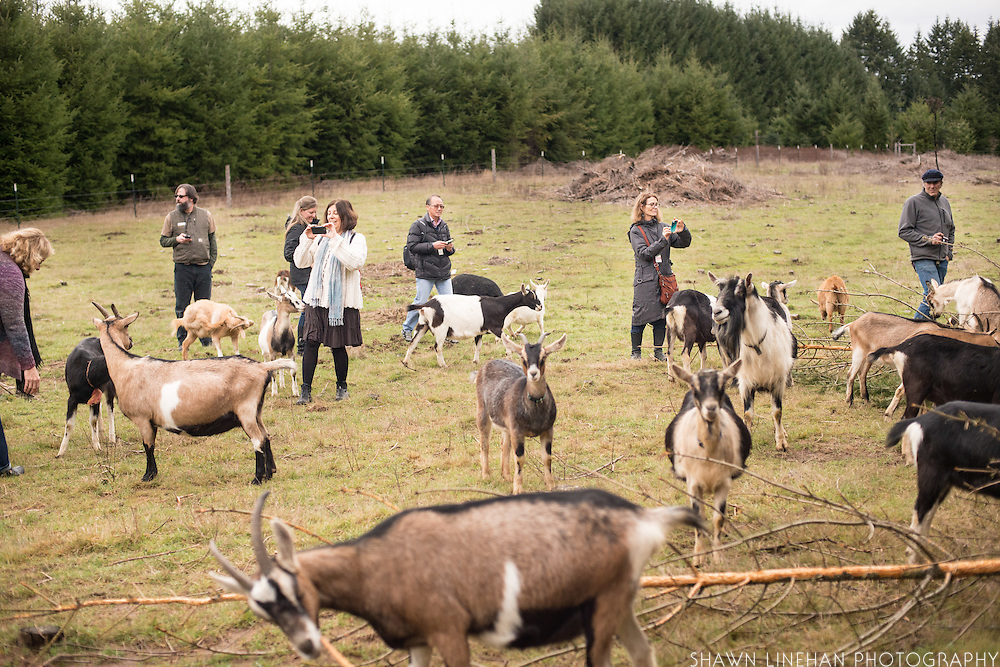 Organicology 2015 farm tour to Fraga Farm Goat Cheese