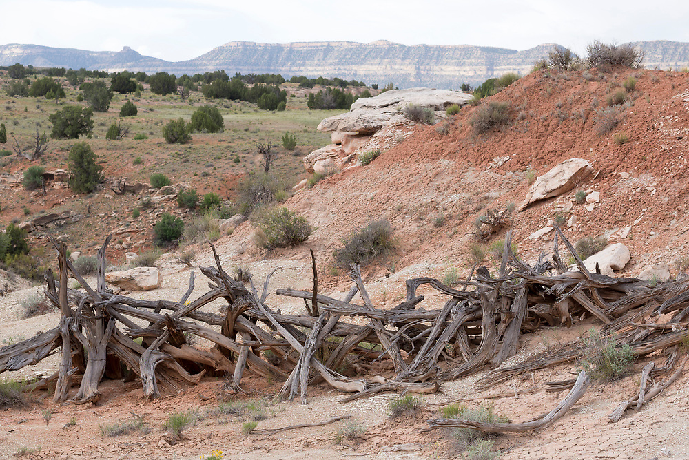 Fence made of juniper logs, Grand Staircase - Escalante National Monument, Utah.